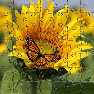 Sunflower Teaser Puzzle