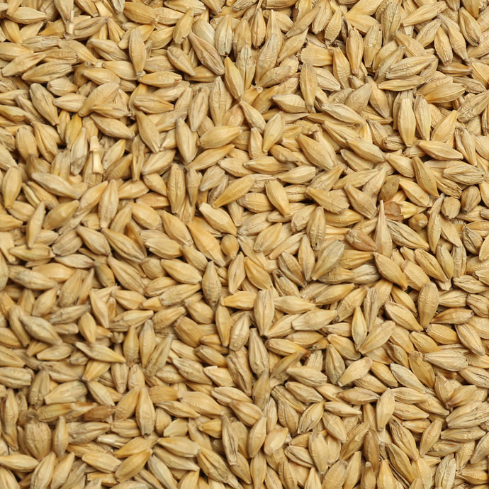 Raw Grains Barley