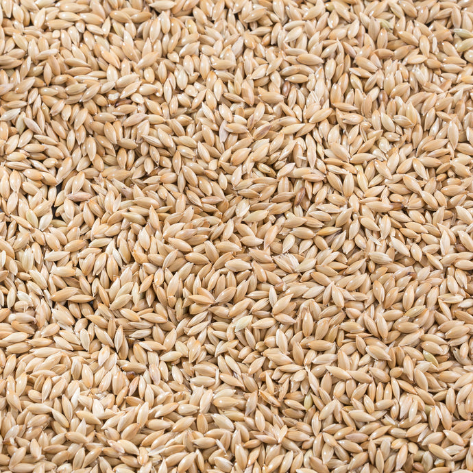 Raw Grains Canary Seed
