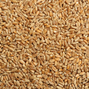 Raw Grains Wheat 25 lb. Bag