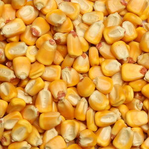 Raw Grains Whole Corn
