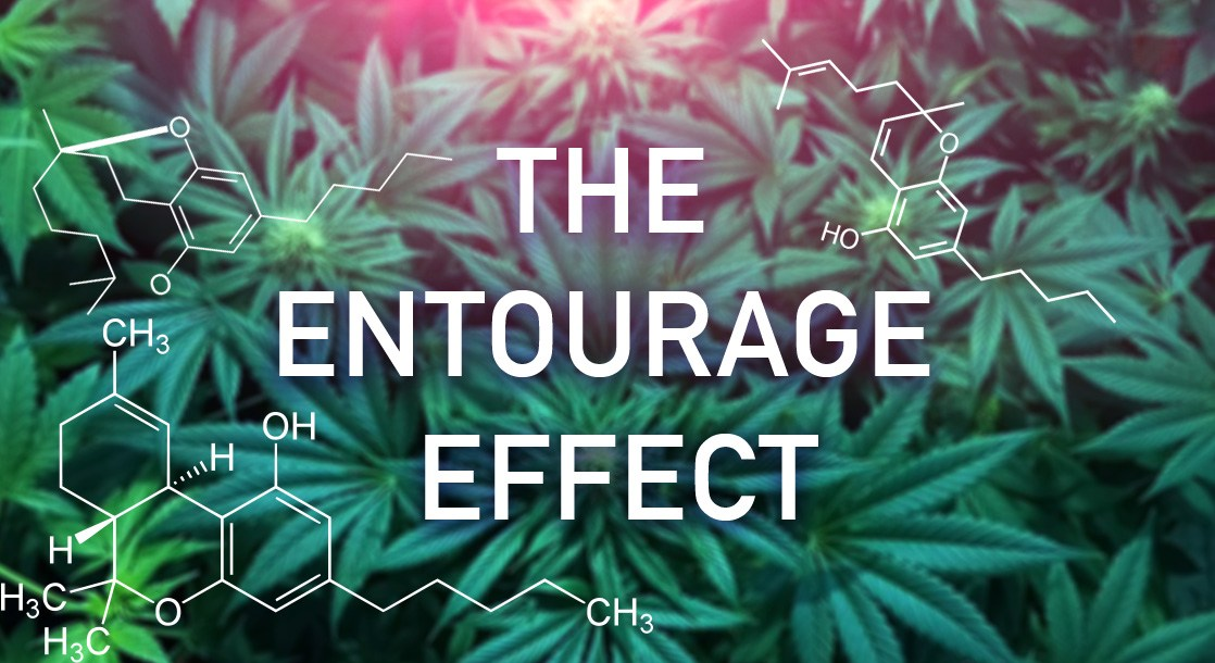 What Exactly is the Cannabinoid Entourage Effect?