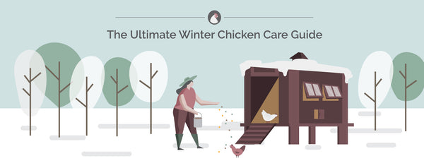 Chickens in the Winter | The Ultimate Guide