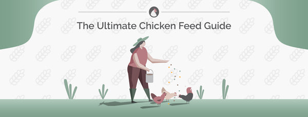 Chicken Feed | The Ultimate Guide