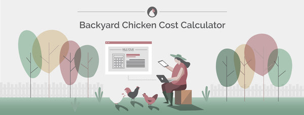 How Much Do Chickens Cost? Free Calculator