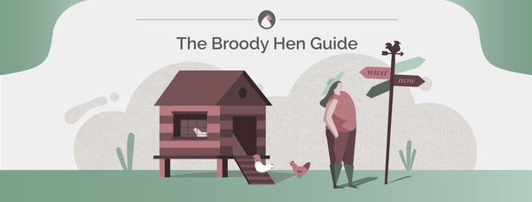 The Broody Hen Guide