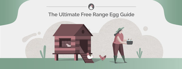 Free Range Eggs Ultimate Guide