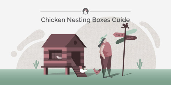 Chicken Nesting Boxes Guide