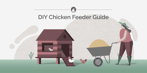 DIY Chicken Feeder Guide