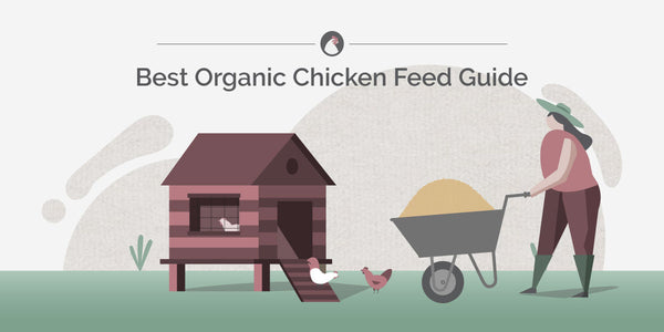best organic chicken feed guide
