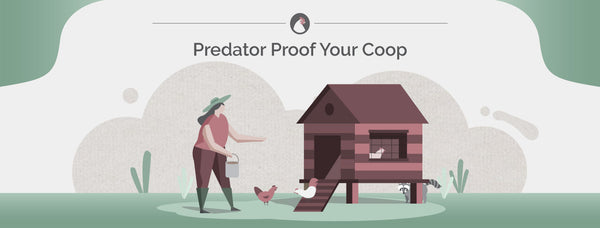 How to Predator Proof Your Chicken Coop