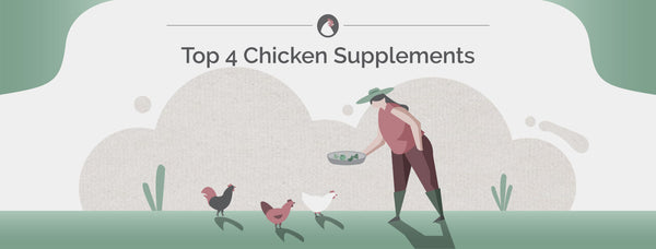 Top 4 Chicken Supplements
