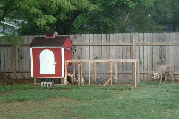 chicken-coop-plan-backyard-living.jpg