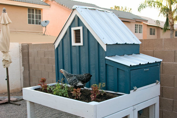 chicken-coop-plan-lady-goats.jpg