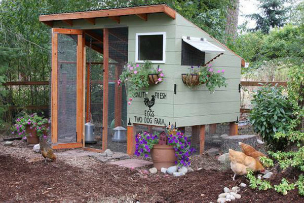 chicken-coop-plan-two-dog-farm.jpg