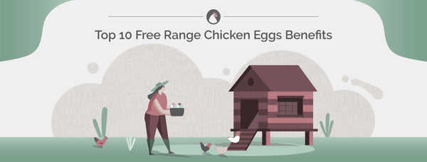 Top 10 Free Range Chicken Eggs Benefits