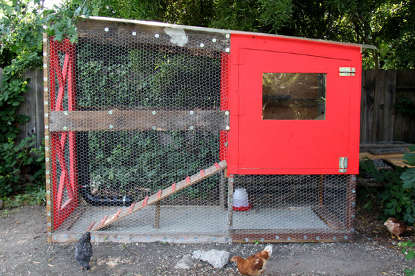 chicken-coop-plan-small-&-friendly.jpg