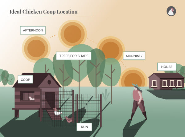 chicken coop location