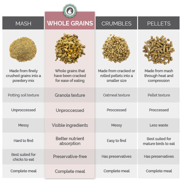 Types of chicken feed comparison chart, wholes grains, pellets, mash, and crumble