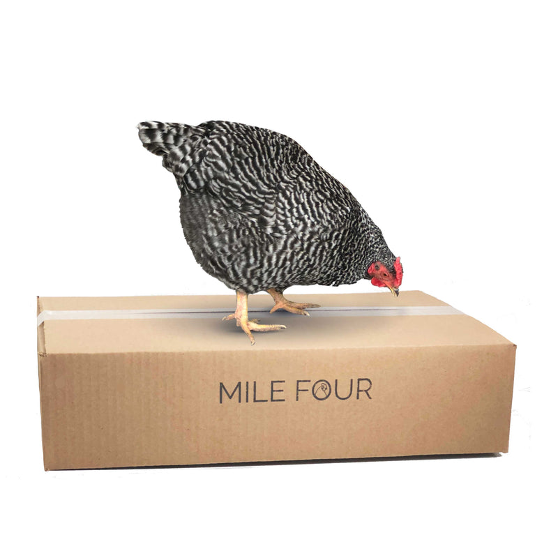 Hen standing on organic chicken feed