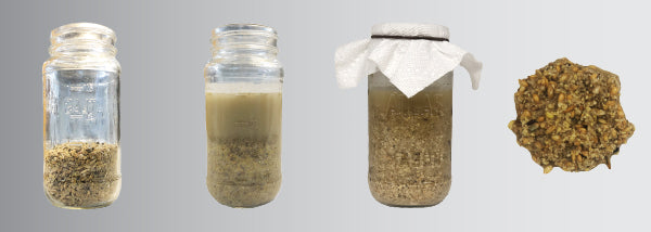 The four stages of fermented chicken feed in a mason glass jar