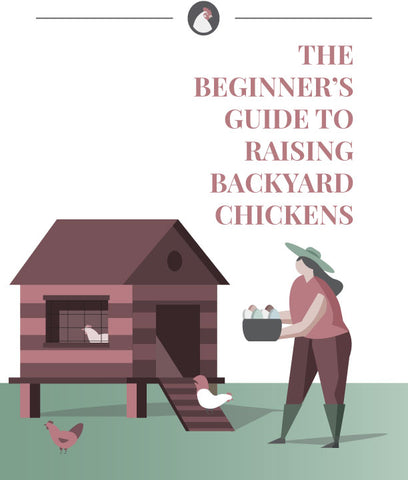 The Beginner's Guide to Raising Backyard Chickens