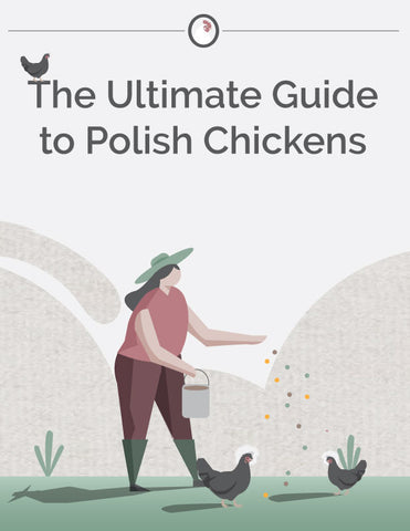 ultimate guide to polish chickens