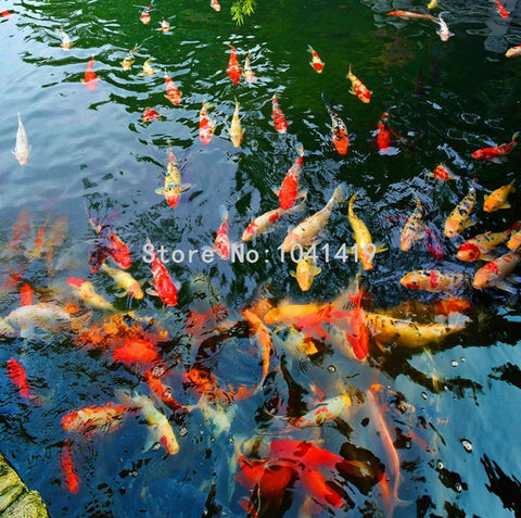 Image of Goldfish Pond Vinyl PVC Floor Mural, Self Adhesive, Custom Sizes Available Household-Wallpaper-Floor Maughon's