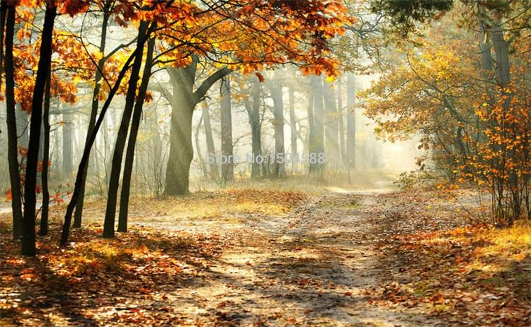 Sunlit Autumn Forest Wallpaper Mural, Custom Sizes Available Household-Wallpaper Maughon's