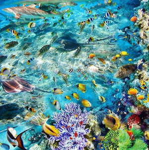 Underwater World Tropical Fish Coral Vinyl PVC Floor Mural, Self Adhesive, Custom Sizes Available