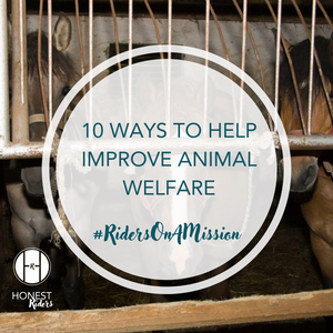 10 ways equestrians can help improve animal welfare
