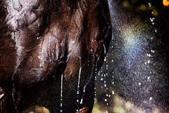 Horse wash shower