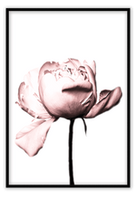 Load image into Gallery viewer, Italian Luxury Group Print 50x70cm / Black Rosa Rose Brand