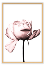Load image into Gallery viewer, Italian Luxury Group Print 50x70cm / Natural Rosa Rose Brand
