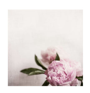 Canvas Rose - italianluxurygroup.com.au