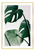 Load image into Gallery viewer, Monstera Leaf - italianluxurygroup.com.au