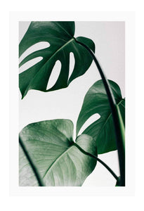 Monstera Leaf - italianluxurygroup.com.au