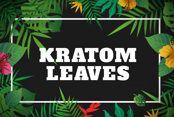 Benefits of Kratom Leaves