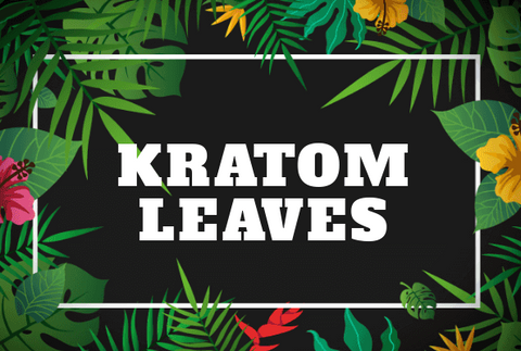 Health Benefits of Kratom Leaves
