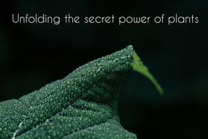 natural plant powders and the secret power
