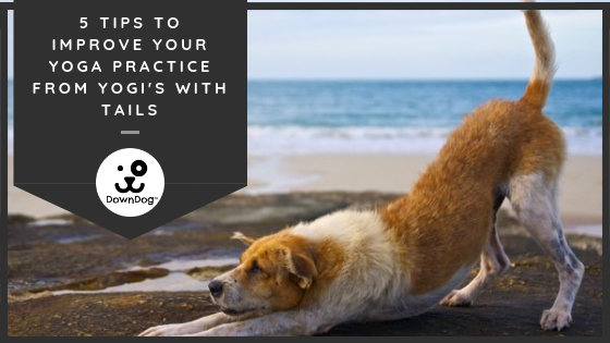 5 Tips To Improve Your Yoga Practice From Yogis WIth Tails