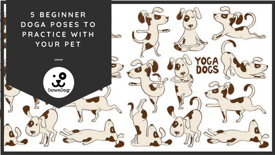5 Beginner Doga Poses To Practice With Your Pet