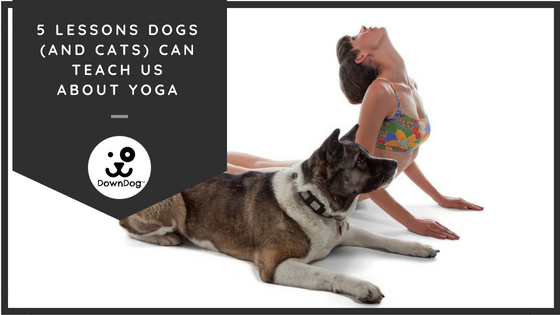 4 Lessons Dogs (And Cats) Can Teach Us About Yoga & Life