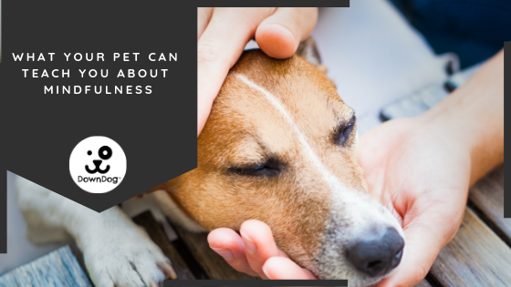 What Your Pet Can Teach You About Mindfulness