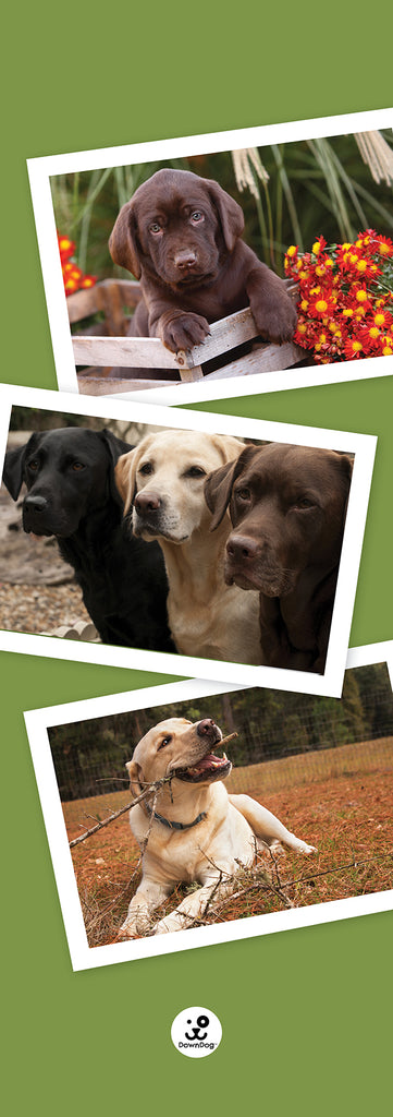 Labrador Retriever Mat