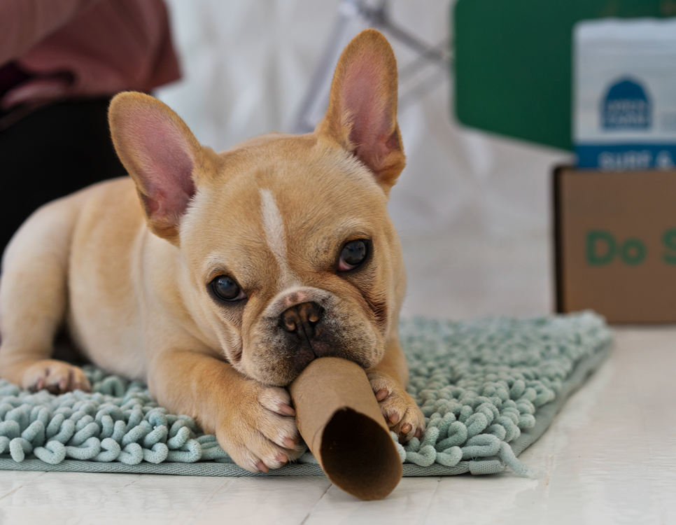 Easy DIY dog toys for puppies