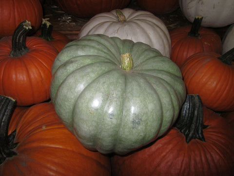 Pumpkins Chicago Specialty Jarrahdale Blue Pumpkin