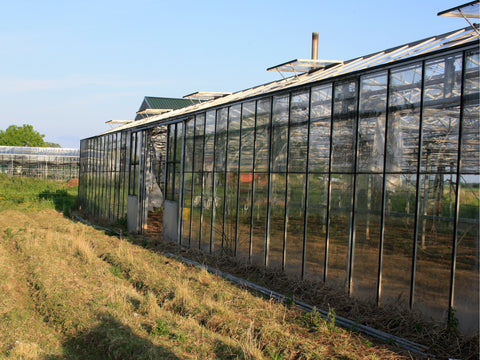 Gosberton Bank Nursery Seed Co-Operative