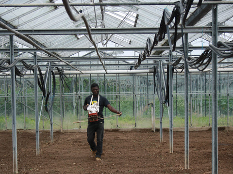 Volunteer in Greenhouse at Seed Co-Operative