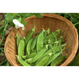 PEA; Sugar Dwarf Sweet Green